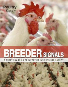 About Poultry Signals 1